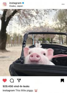 Instagram algoritme liken en opslaan